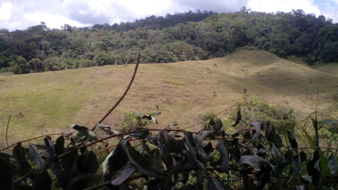 Rechazan tala de eucaliptos en Oporapa 1
