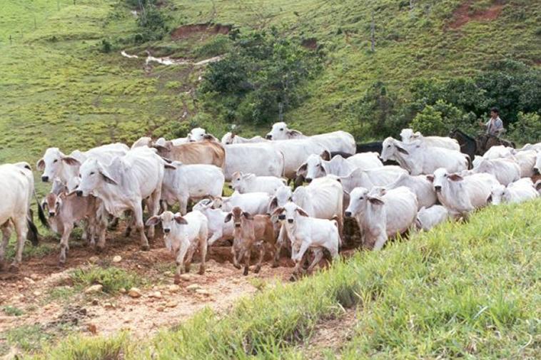 Articular ganadería a políticas públicas, solicitó Asamblea del Huila