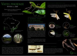 Descubren nueva especie de mantis religiosa en Brasil- National Geographic
