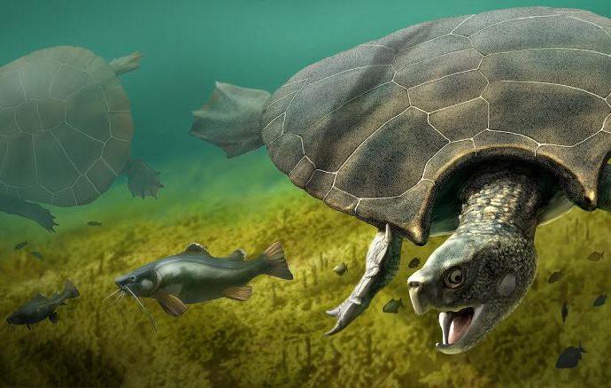 La tortuga más grande que haya existido, vivió hace 5 millones de años en el desierto de La Tatacoa