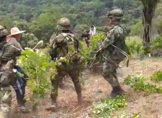Disparando, Ejército realiza erradicación forzada y violenta en La Montañita, Caquetá
