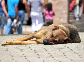 Grupo de animalistas pide protección al Alcalde de Neiva