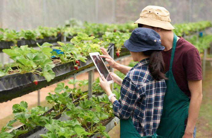 Sector agropecuario y tecnología, pilares de la economía rentable en Colombia