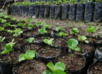 Caficultores nataguenses, son capacitados para producir café de alta calidad