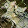 Liberan fauna silvestre en reserva natural del Huila