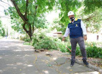Para mejorar movilidad, Alcaldía de Neiva reemplazará pavimento y árboles en barrio La Orquídea