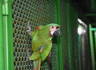 1.024 especímenes de fauna silvestre han sido recuperados en el Huila