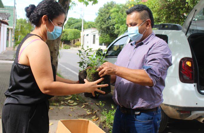 Ecopetrol entregó más de 89 mil árboles en el Huila durante el año 2020