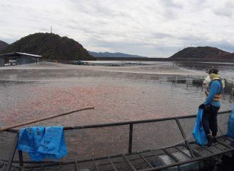 Innovación científica para la cadena piscícola del Huila