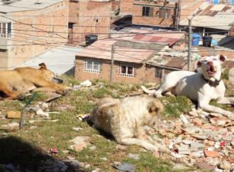 Contraloría Distrital denuncia retrasos en el proyecto Casa Ecológica de los Animales