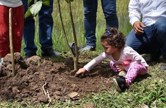 Este año la meta es sembrar 140 mil árboles en el Huila: CAM