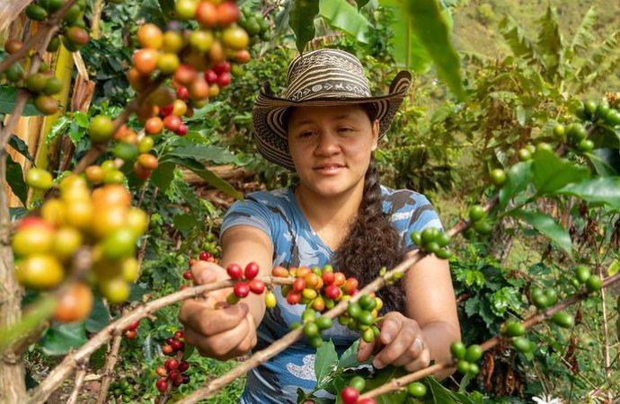 Gobierno nacional ha invertido 2.951 millones de pesos en proyectos cafeteros de excombatientes