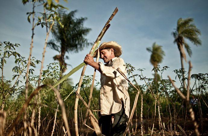 Los ingenios azucareros sembrarán 1400 árboles en 4 municipios del Valle del Cauca