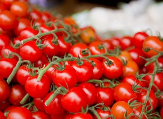 Aportarán cerca de $217 millones para fortalecer la producción de Tomate Cherry en Tesalia
