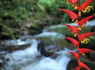 La CAM avanza en la conservación del patrimonio natural del Huila