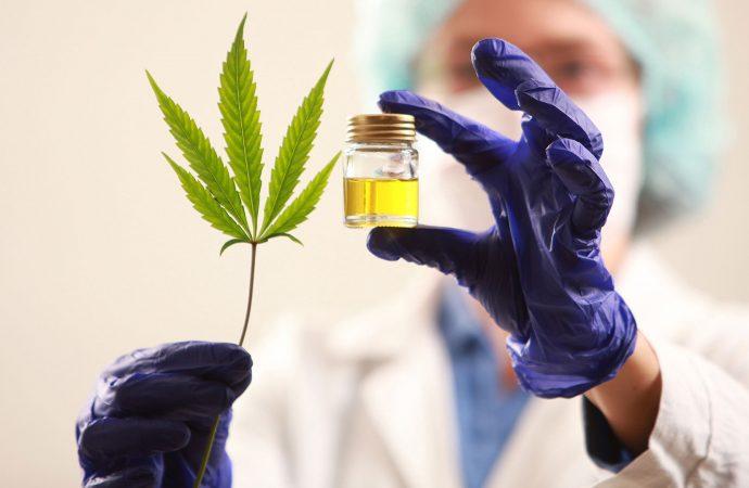 Cannabis, una oportunidad más para la economía regional