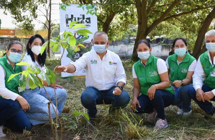 En el Huila hemos sembrado más de 914 mil árboles: CAM
