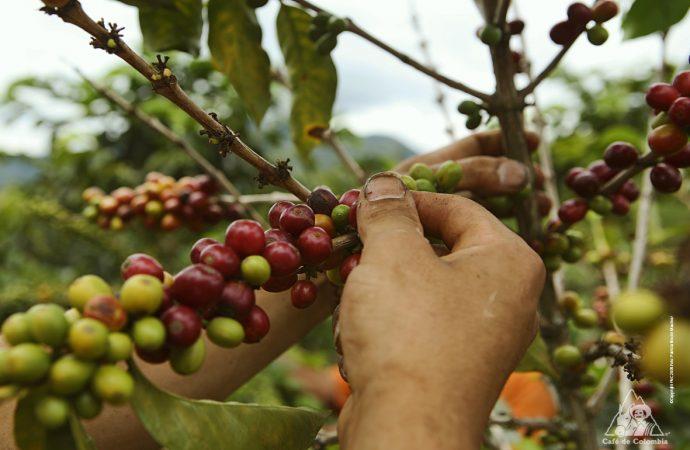 Productores del campo huilense abrirán mercados a nivel nacional